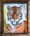 Tiger by B. Hefner