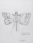 Galapagos Moth by California Institution for Men
